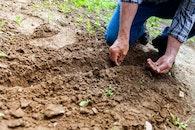 person, hands, garden
