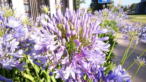 Ingyenes stockfotó gyufa feje, közeli felvétel, lila, lila virágok témában