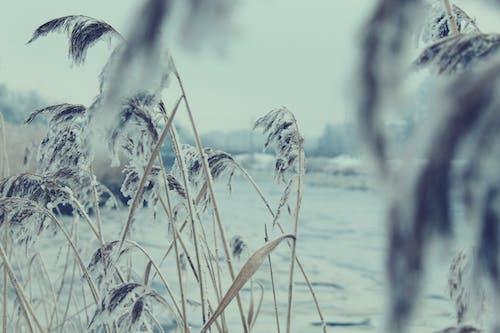 Ingyenes stockfotó anyatermészet, hideg, hó, tél témában