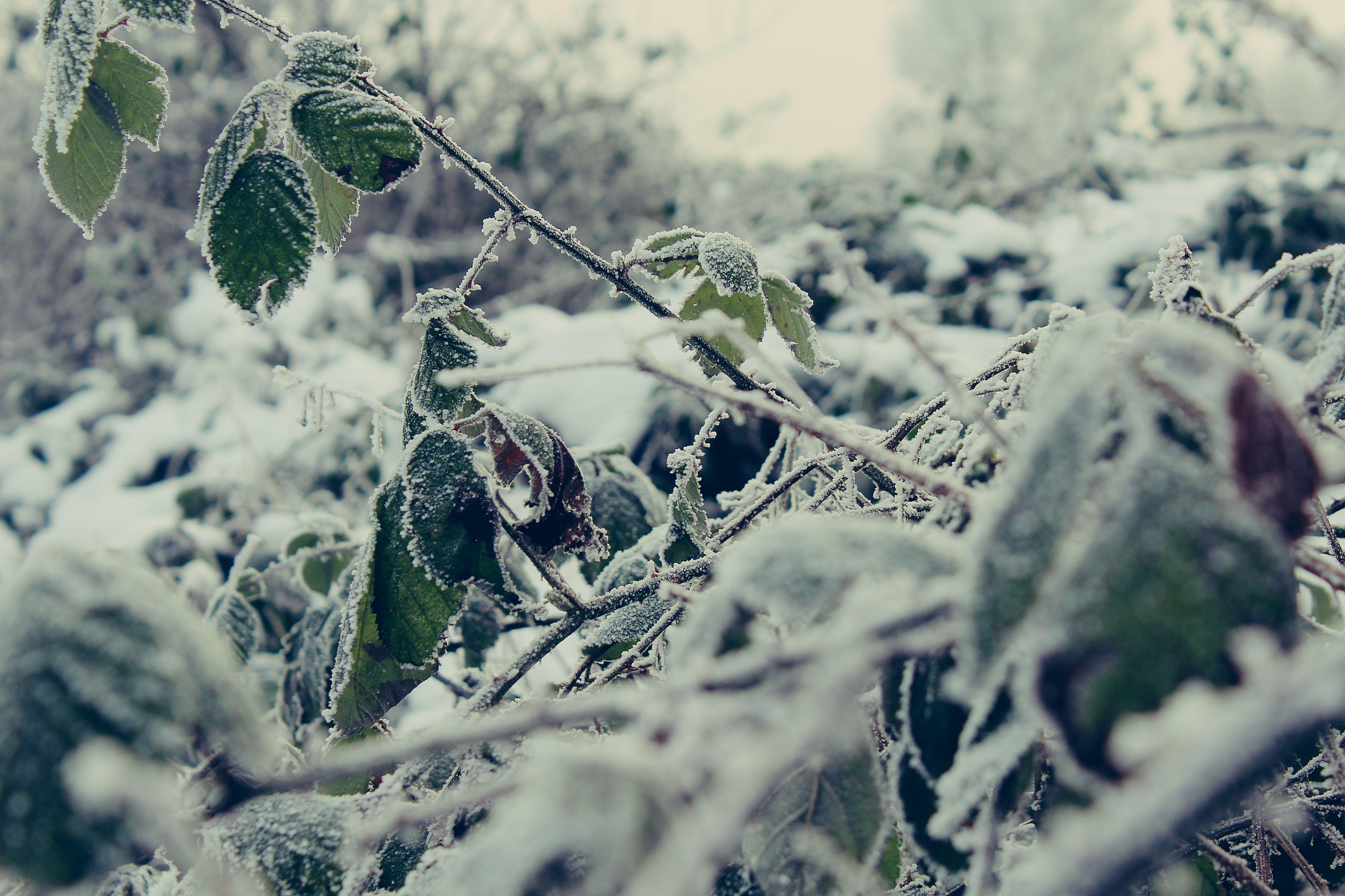 Kostenloses Stock Foto zu kalt, mutter natur, schnee, winter