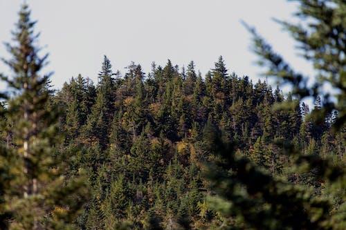 Foto d'estoc gratuïta de a l'aire lliure, arbres, bosc, boscos