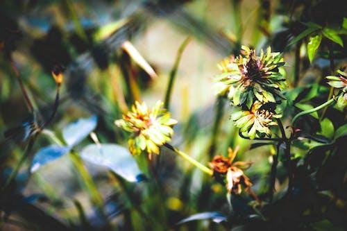 Бесплатное стоковое фото с ботанический сад, зеленые листья, индия, красивые цветы