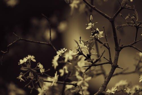 4k duvar kağıdı, Ağaç dalları, arı, Bahçe içeren Ücretsiz stok fotoğraf