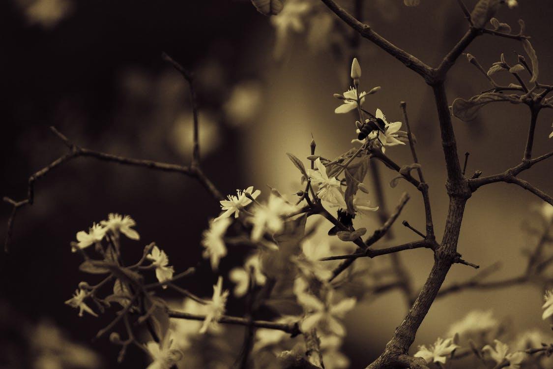 ape, bianco e nero, fiori