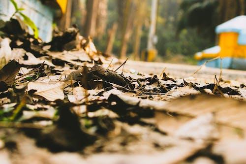 Бесплатное стоковое фото с ботанический сад, коричневые листья, коричневый, обои 4k
