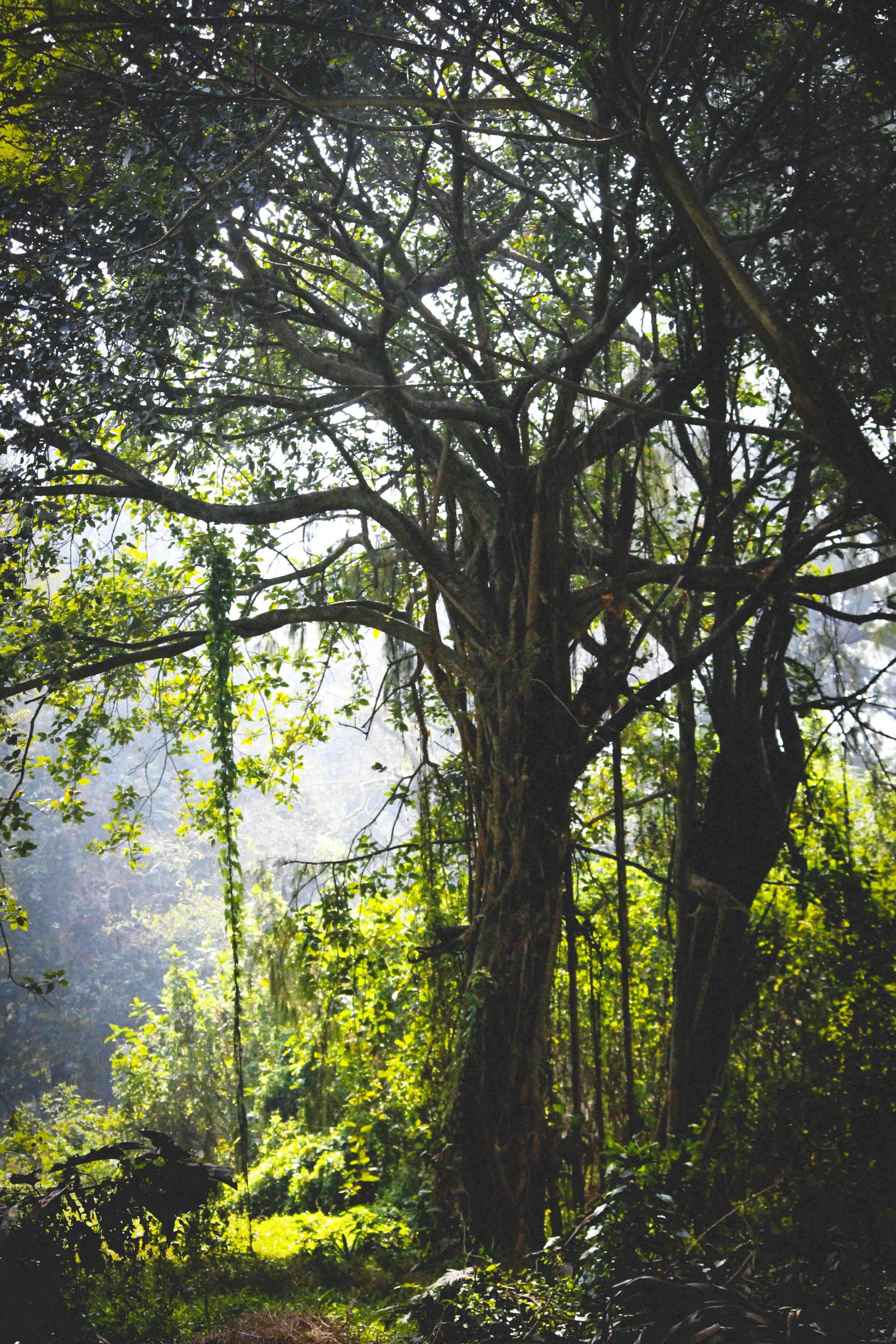 Kostenloses Stock Foto zu äste, bäume, baumstamm, blätter