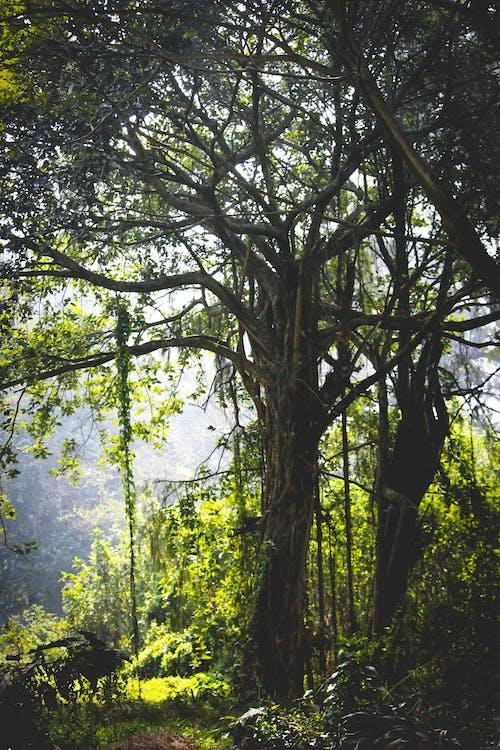 Ağaç dalları, ağaç gövdesi, ağaçlar, bitki örtüsü içeren Ücretsiz stok fotoğraf