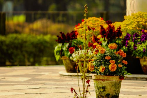 4k duvar kağıdı, Bahçe, Botanik Bahçesi, Çiçek saksıları içeren Ücretsiz stok fotoğraf