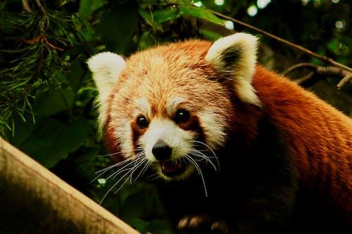 動物, 可愛, 哺乳動物, 小 的 免费素材照片