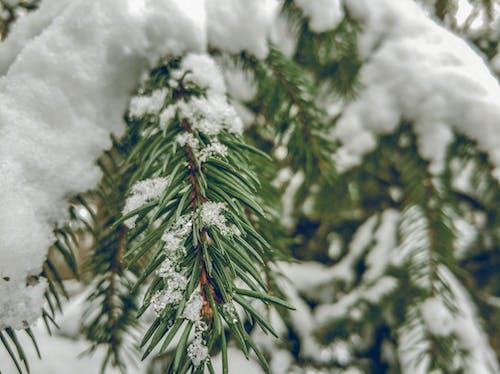 gün ışığı, kar, kış, mevsim içeren Ücretsiz stok fotoğraf