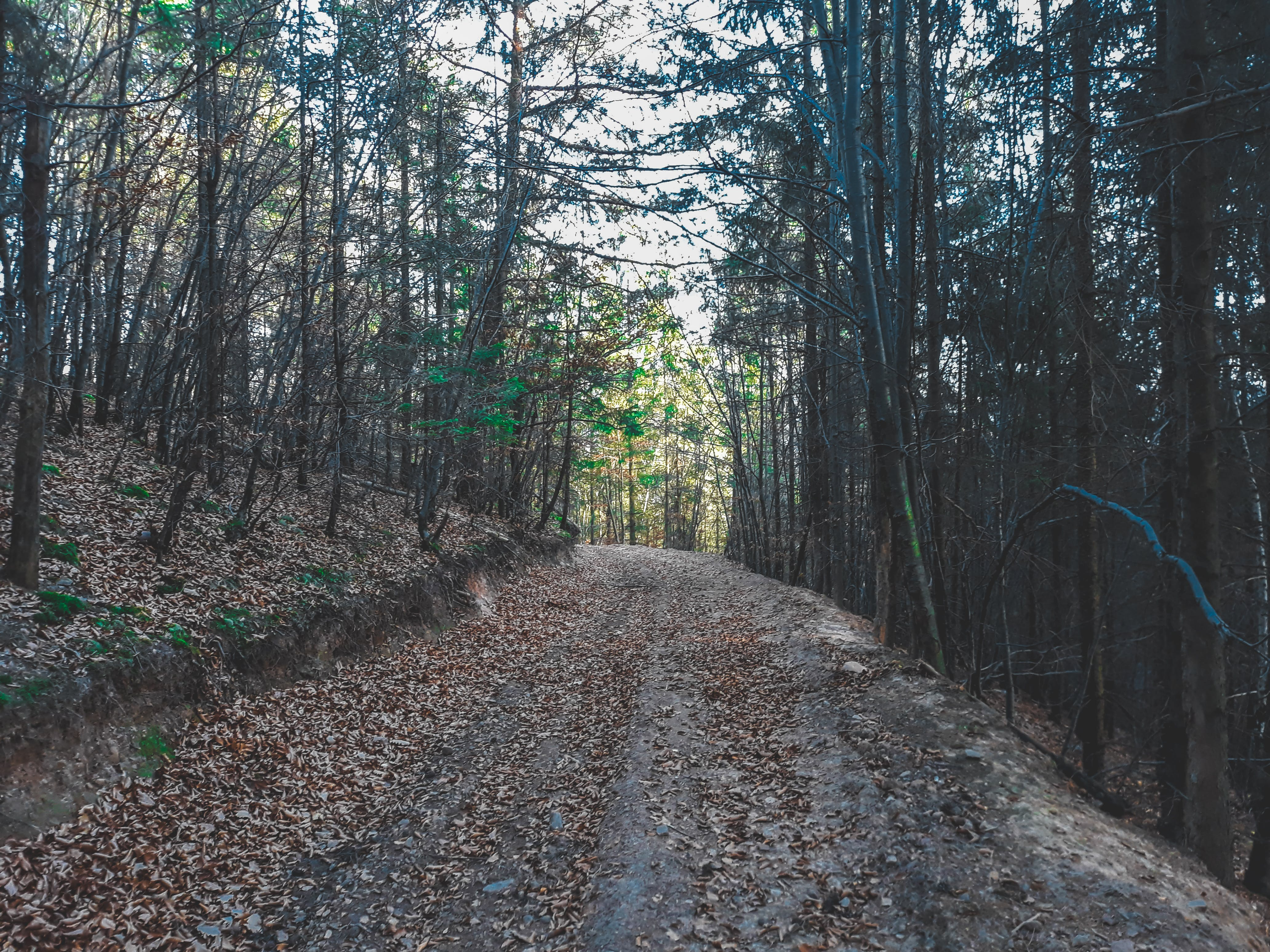 Free stock photo of forest, forest path, trees