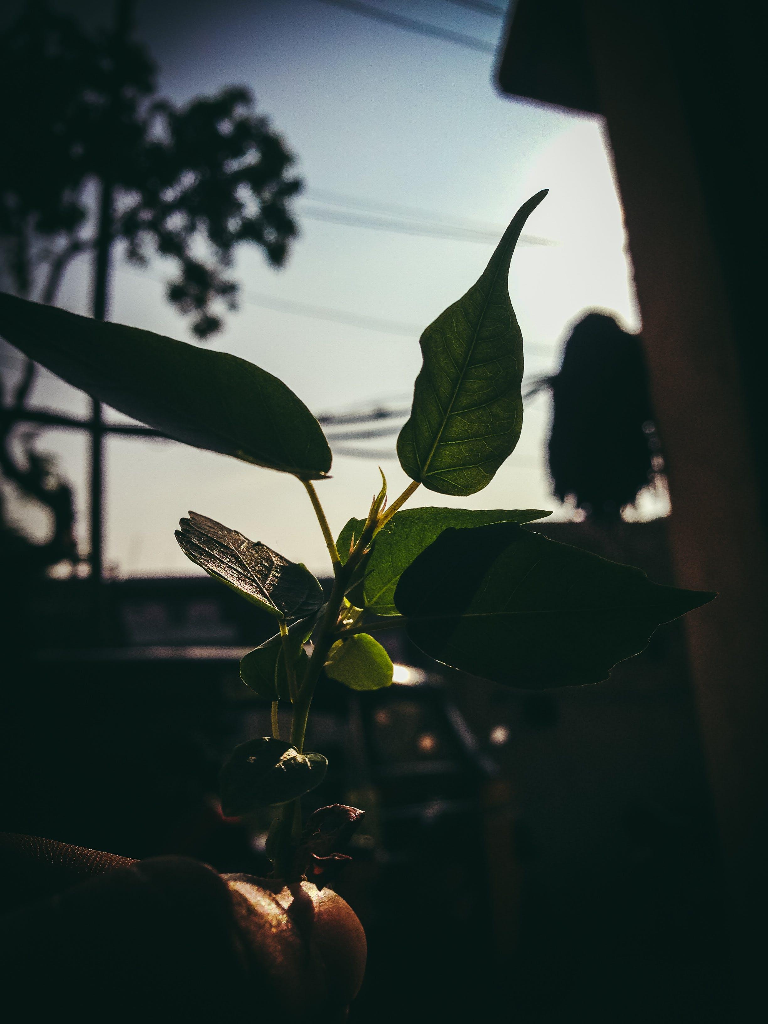 Foto profissional grátis de iluminado por trás, planta