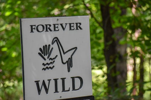 Free stock photo of forever, park, rebel, sign