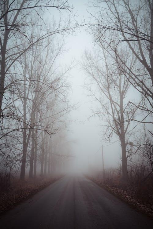 Foto profissional grátis de árvores, com frio, enevoado, estrada
