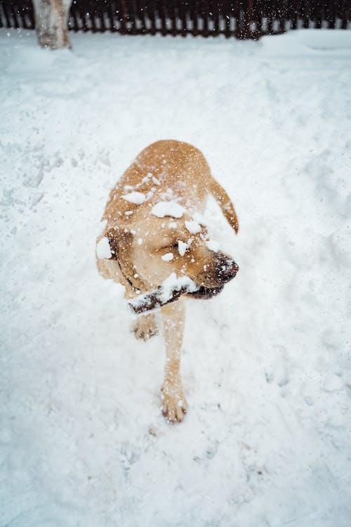 animal, caní, cobert