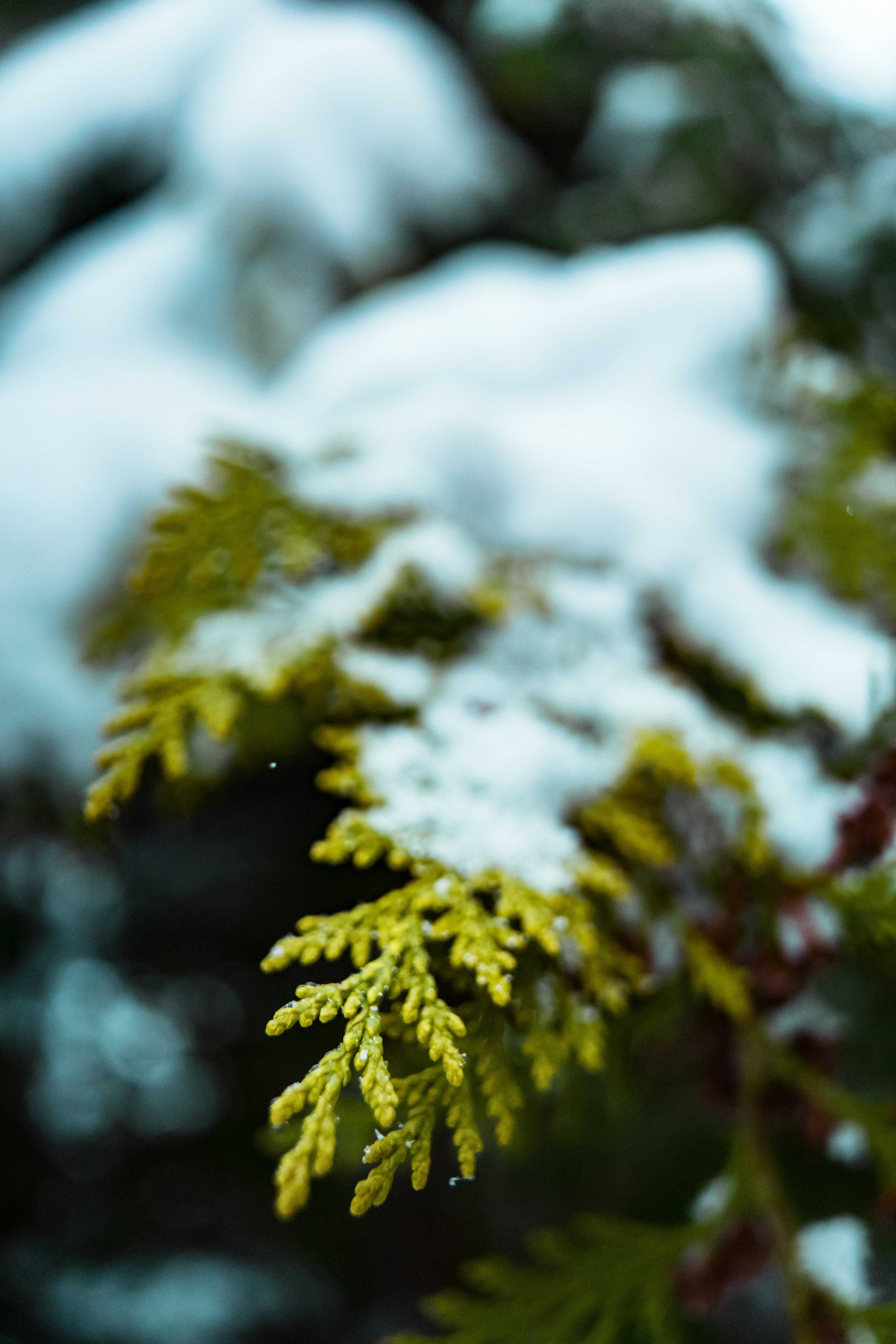 Selective Focus Photography of Snow