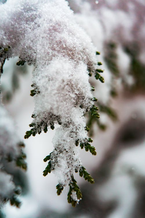 Selective Focus Photography of Snow-covered Tree