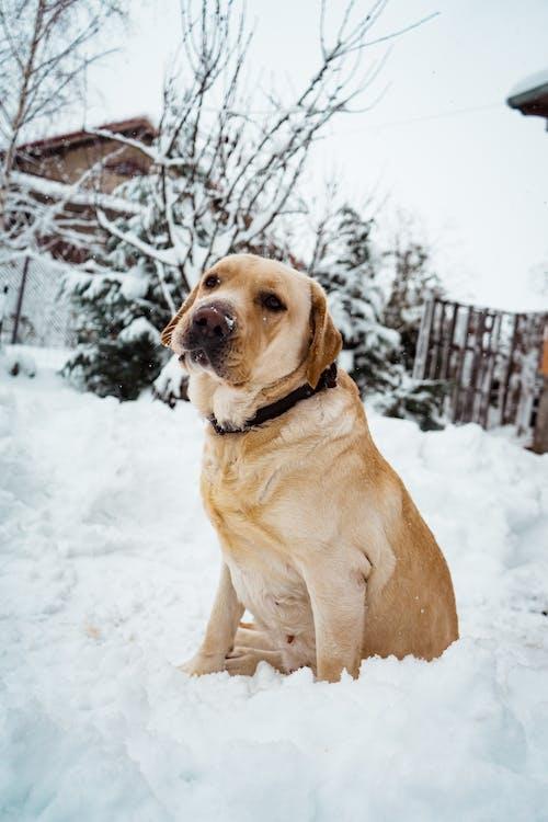 Fotos de stock gratuitas de adorable, animal, animal domestico, canino