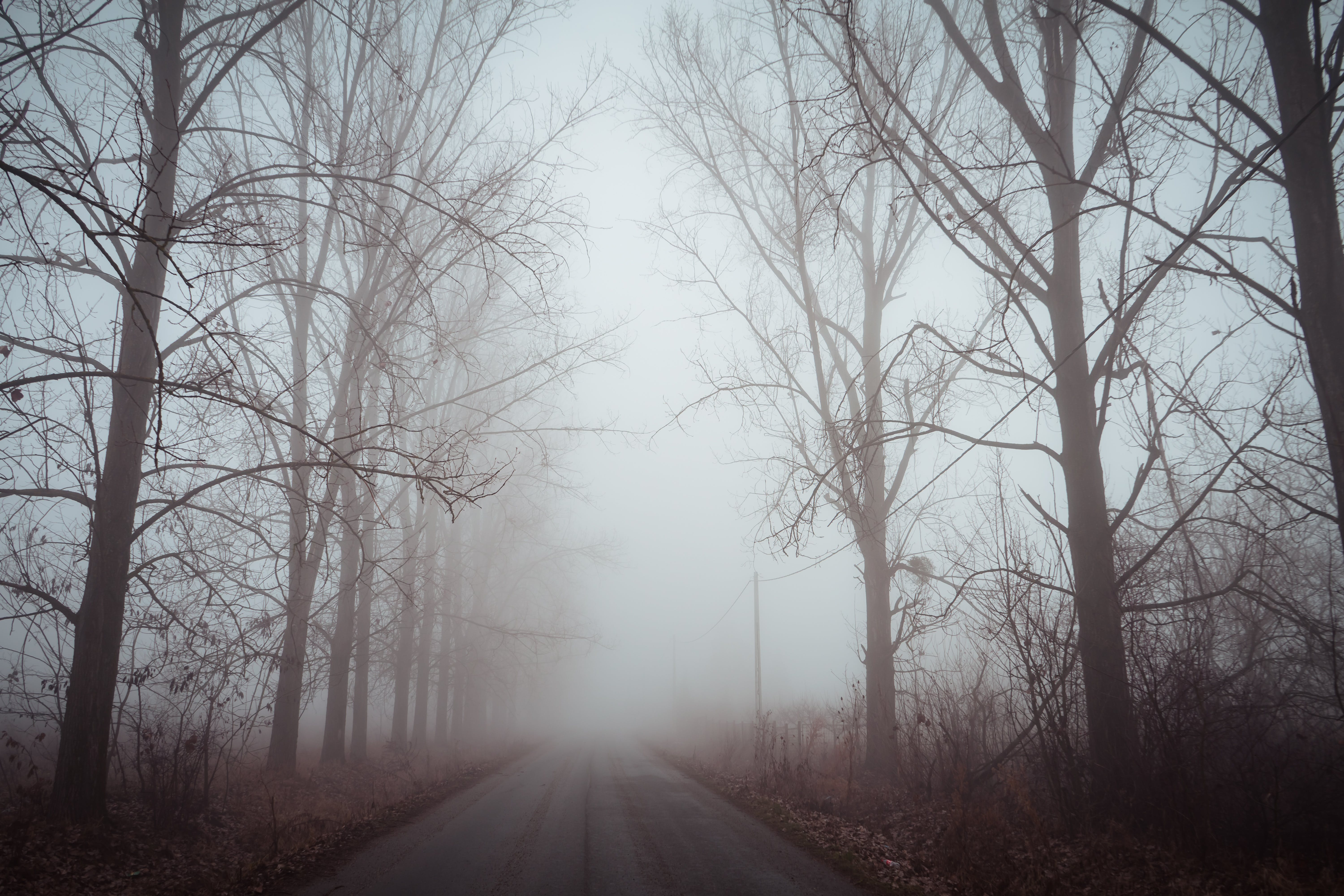 Bare Trees With Fog on Road