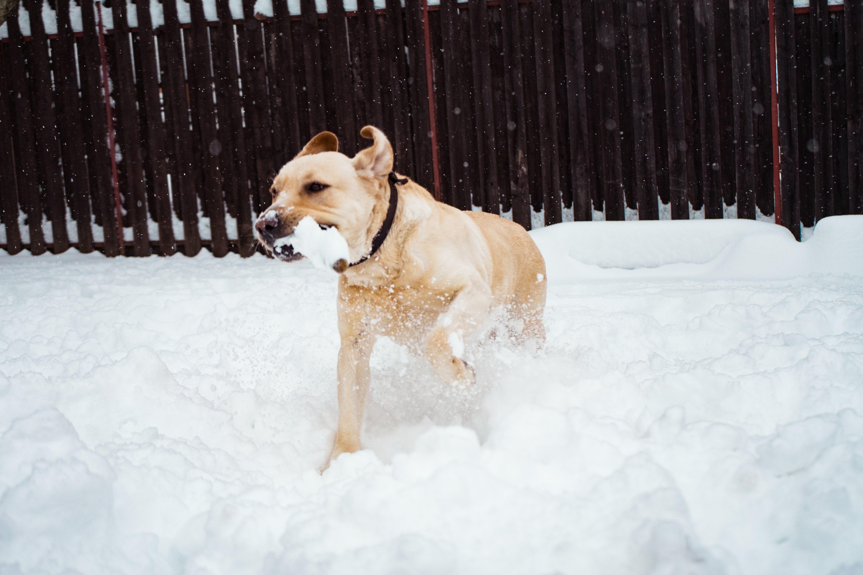 Photo of Dog On Snow