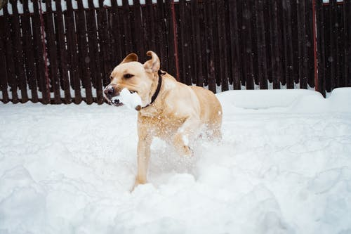 Photo of Dog On Snow