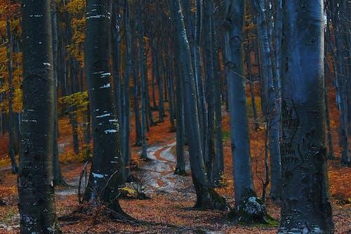 Gratis stockfoto met 4k achtergrond, bomen, Bos, bossen