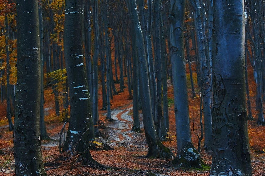 HD-обои, деревья, живописный