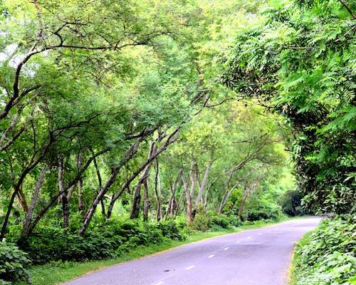 Free stock photo of bangladesh, home coming, road to home