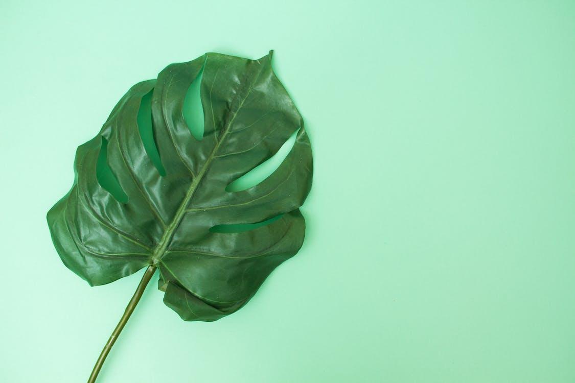flatlay, plano cenital, planta