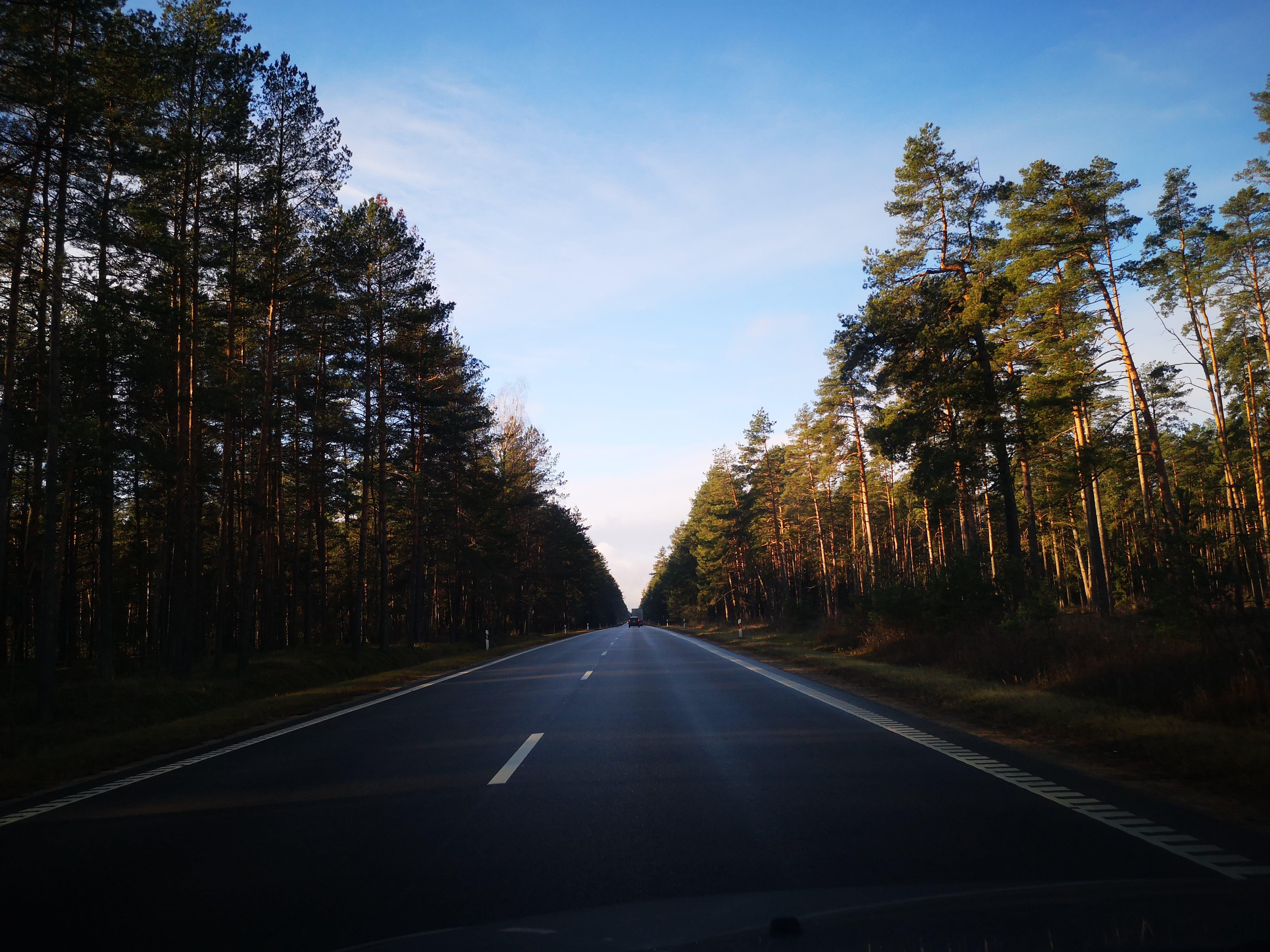 zu asphalt, autobahn, bäume, fahrt