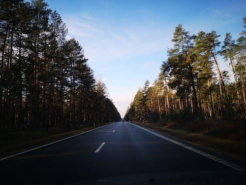 Ilmainen kuvapankkikuva tunnisteilla ajaa, ajomatka, asfaltti, havupuut