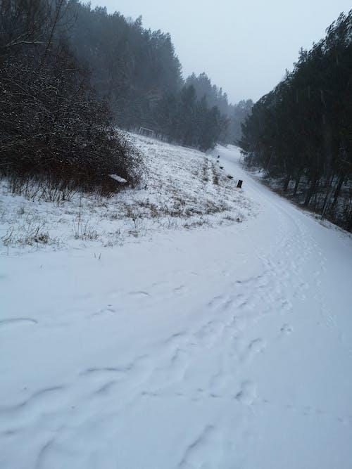 Foto d'estoc gratuïta de bosc, carretera, hivern, neu