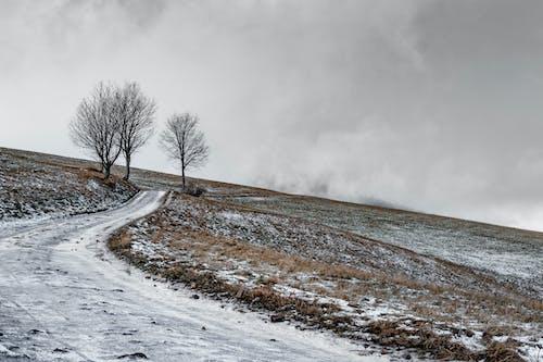 Imagine de stoc gratuită din anotimp, arbori, cale, câmpuri