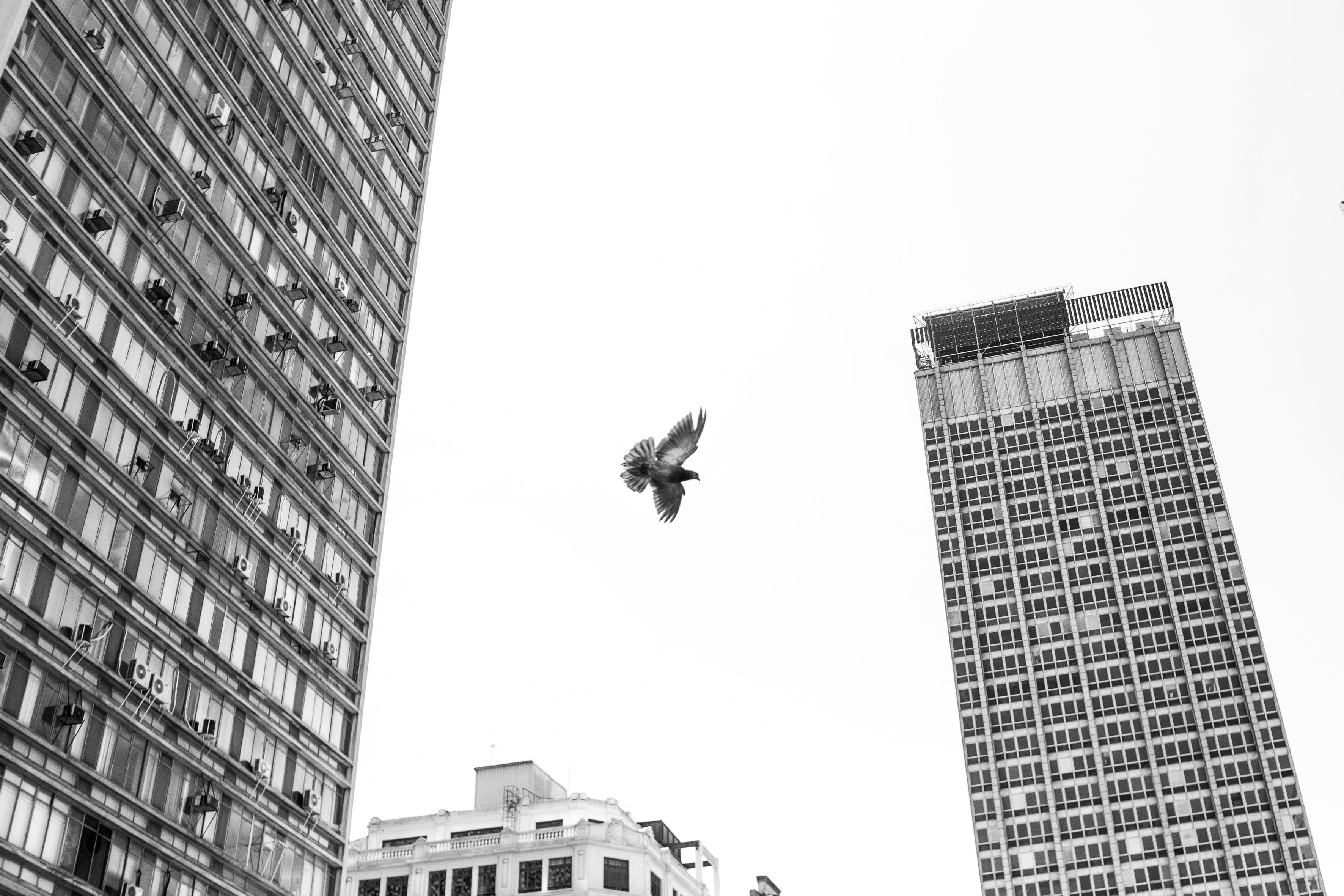 Monochrome Photo of Flying Bird