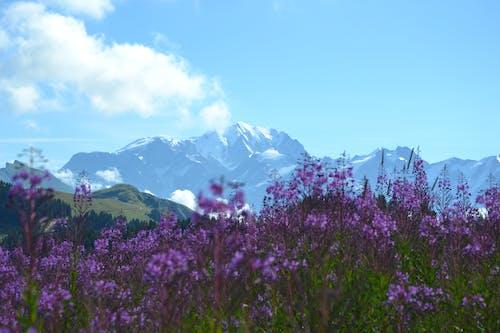 天性, 天空, 山, 日光 的 免费素材照片