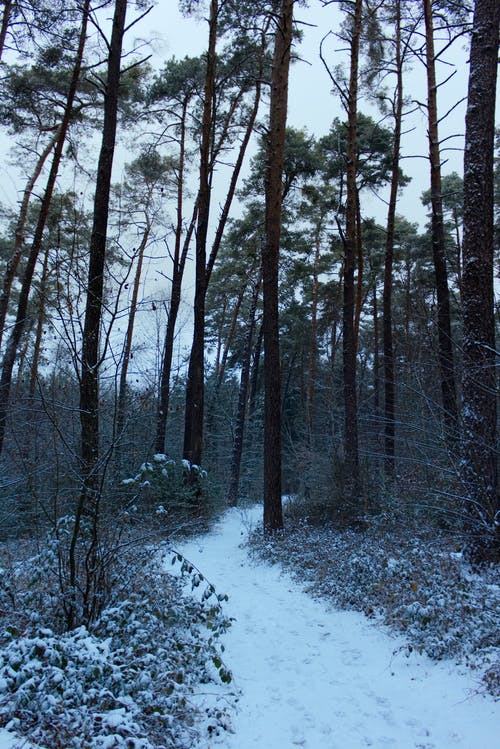 Free stock photo of christmas, Fairway, forest, snow