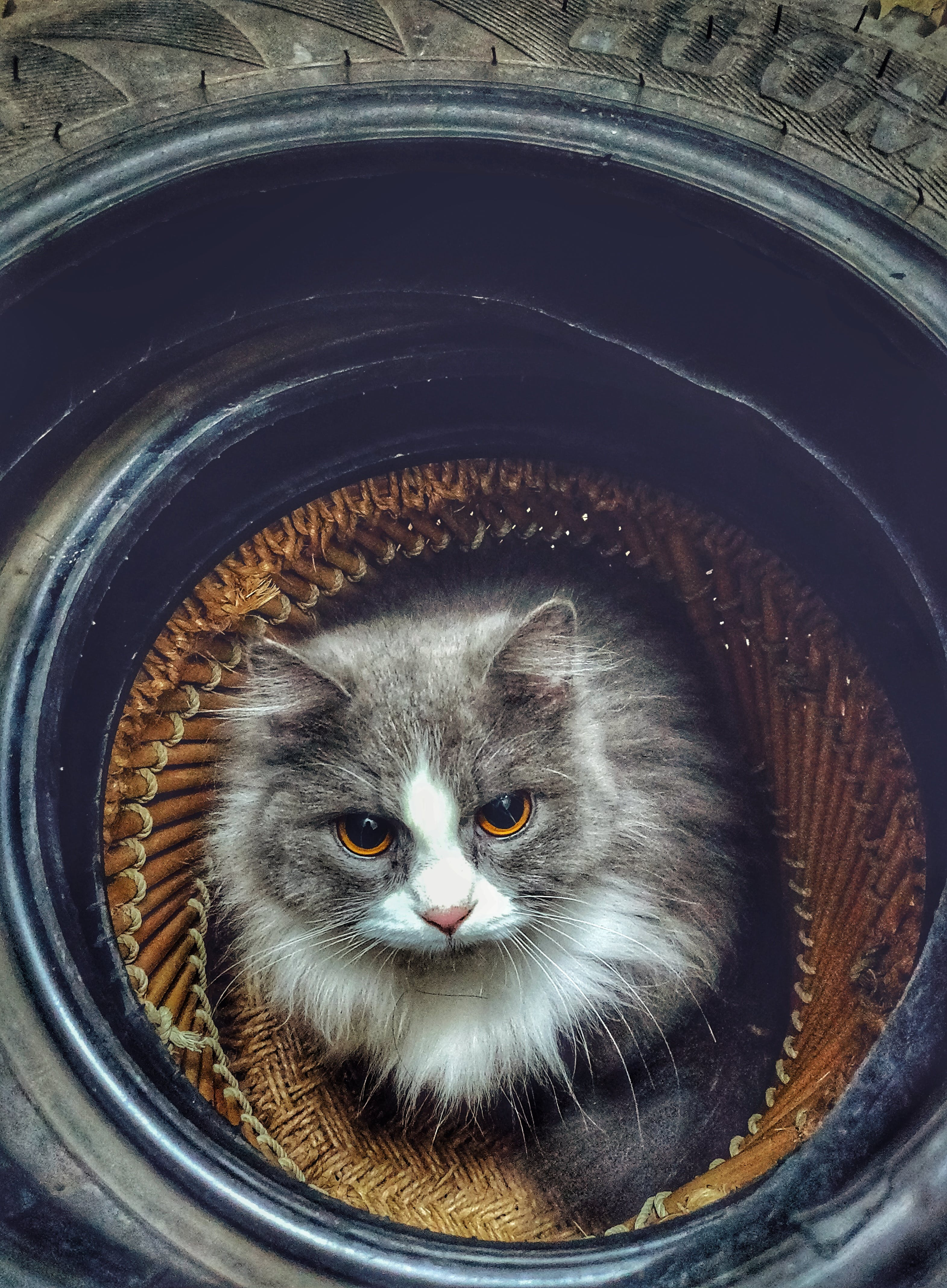 Gray and White Cat on Tire