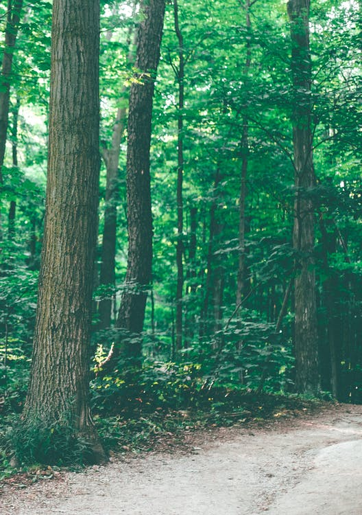 Photo of Pathway in Forest