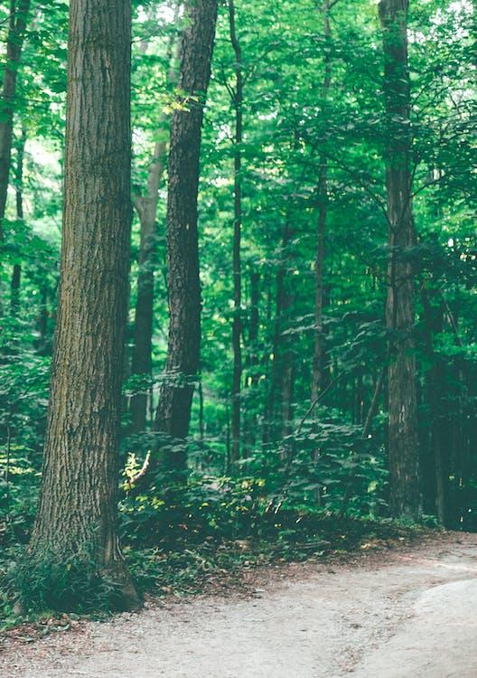 дерева, зелене листя, ліс