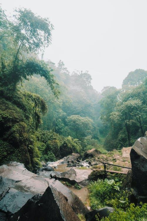 Imagine de stoc gratuită din cascadă, coban talun, codru, Indonezia