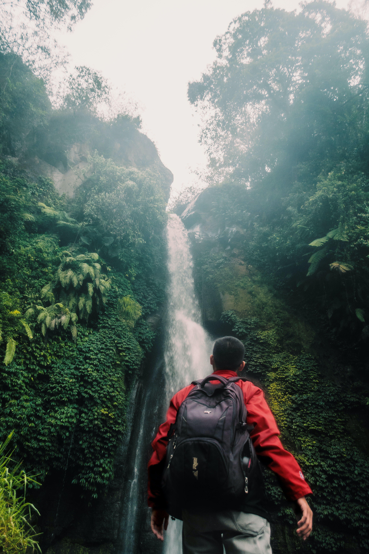 Základová fotografie zdarma na téma denní světlo, dešťový prales, džungle, hora
