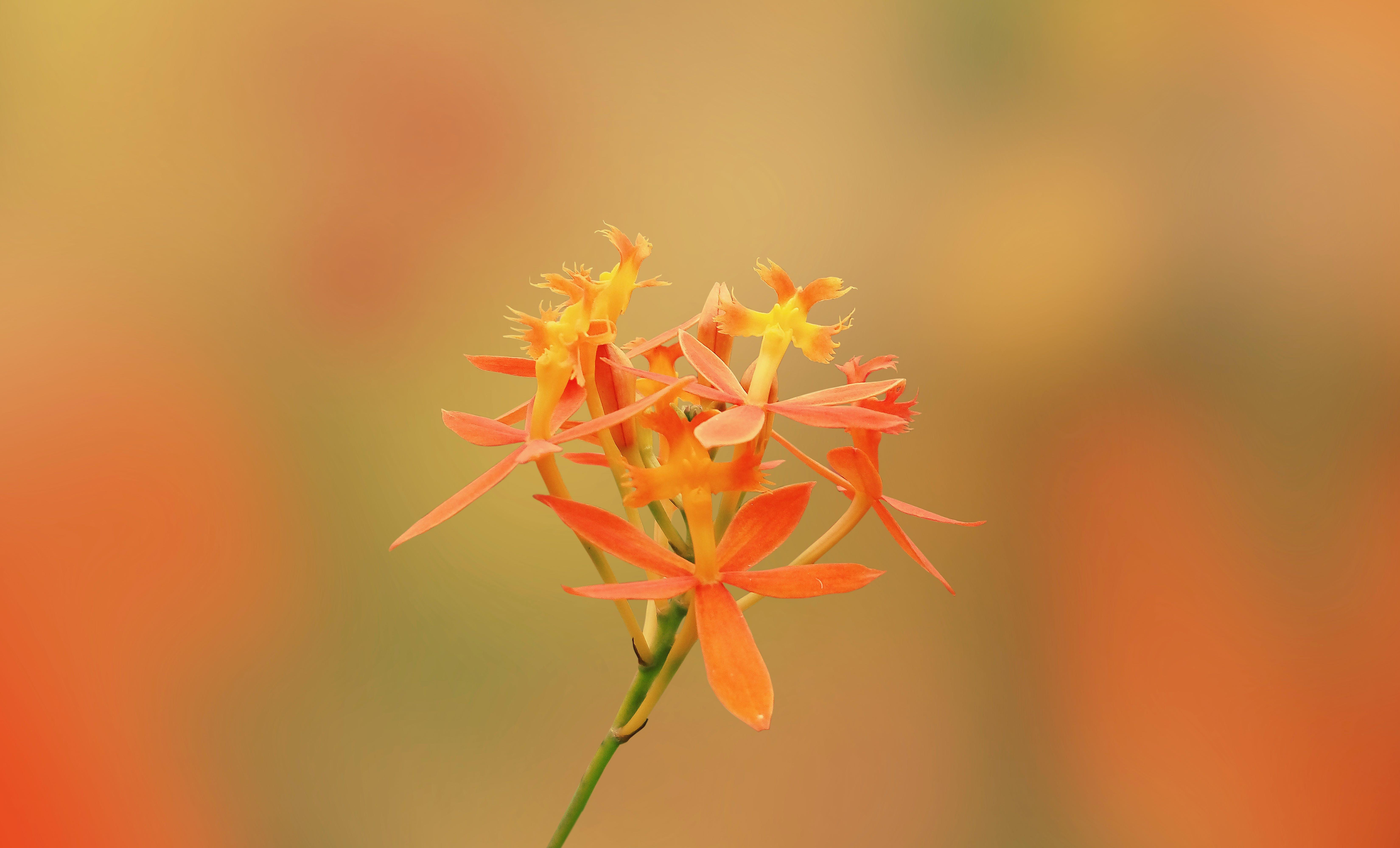 Free stock photo of green background, orange background, orange color, orange flower