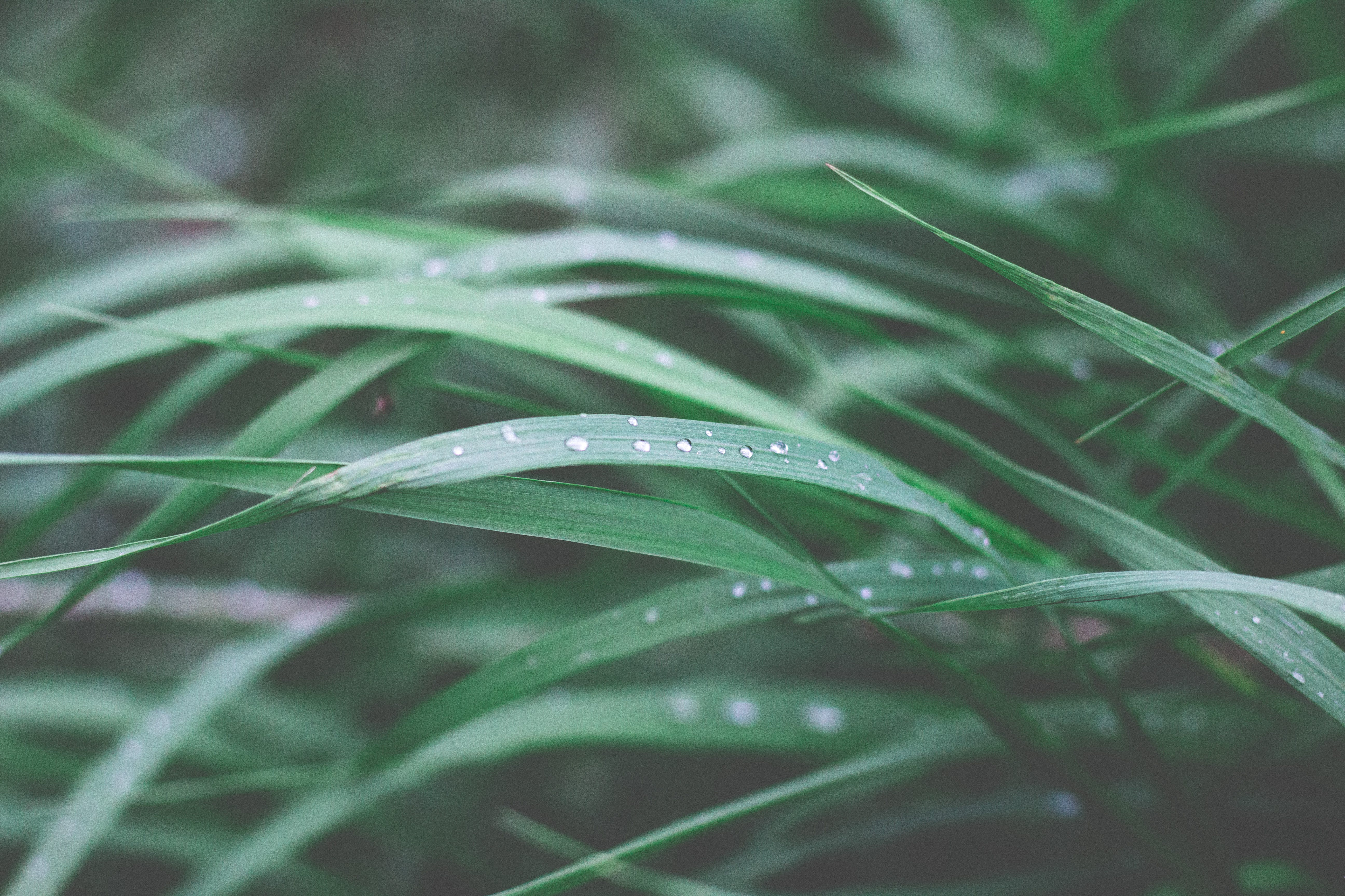 Close-up Photography of Green Leaf Plant