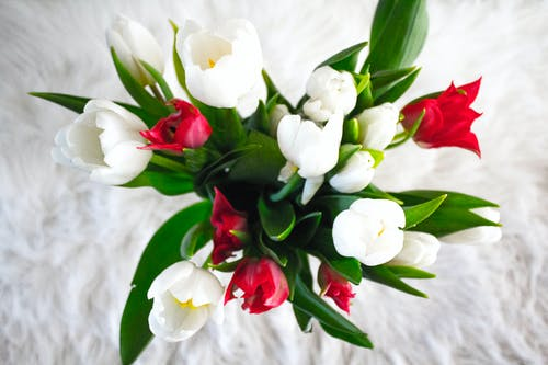White And Red Tulip Flowers
