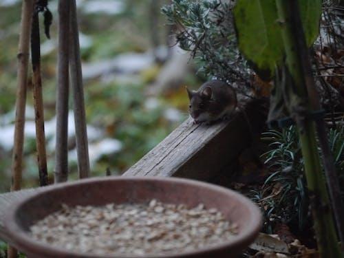 Безкоштовне стокове фото на тему «миша»