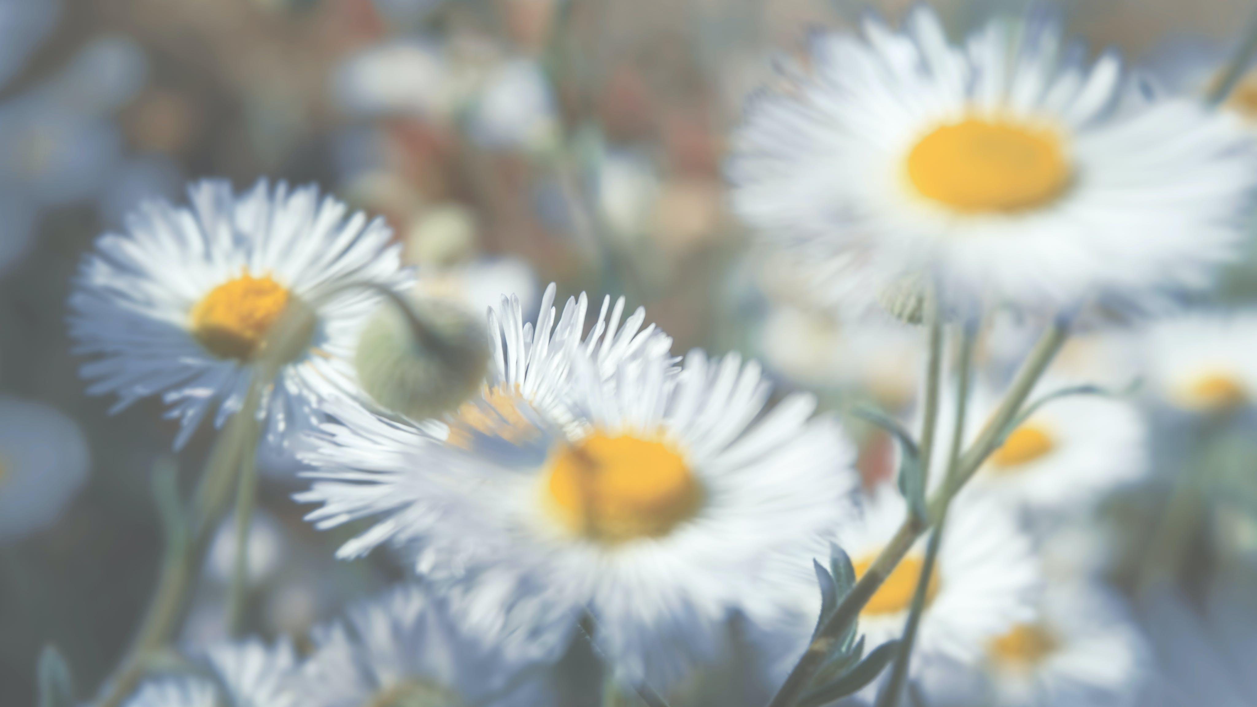 Foto d'estoc gratuïta de flors, fons, macro, natura