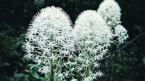 Fotobanka sbezplatnými fotkami na tému kvety, kvitnutie, les, príroda