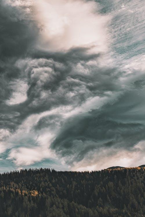 Foto profissional grátis de céu, floresta, madeiras, natureza