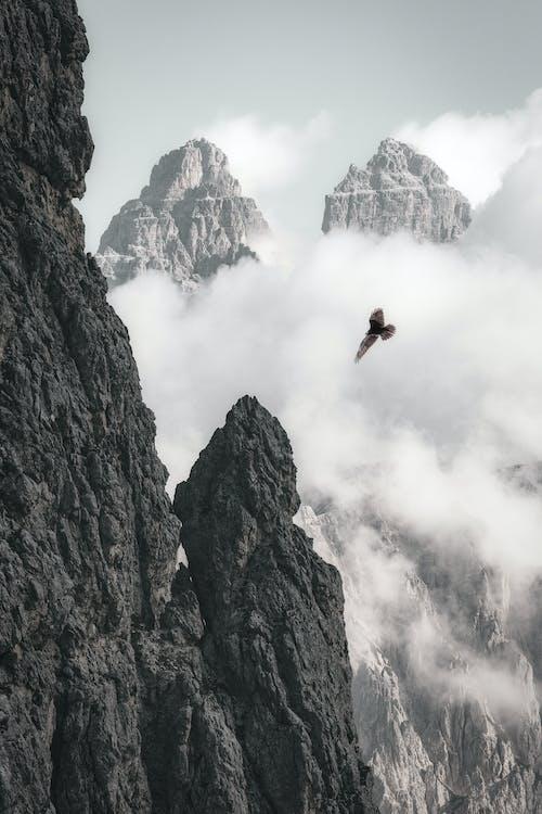 Águila Calva En Vuelo Cerca De La Formación Rocosa