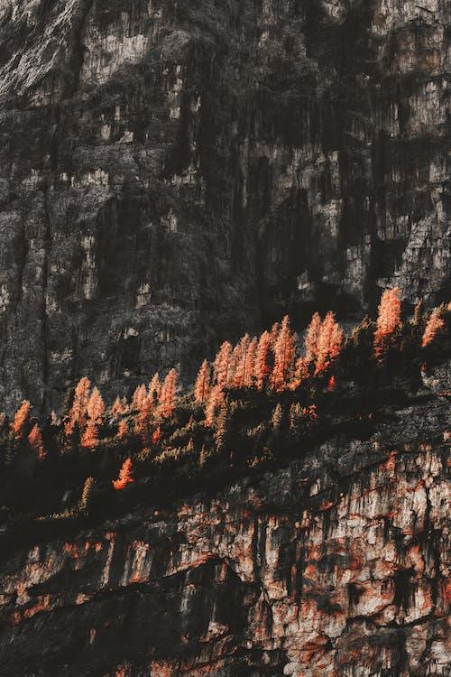 Immagine gratuita di colore, formazione rocciosa, impianti, luce del giorno